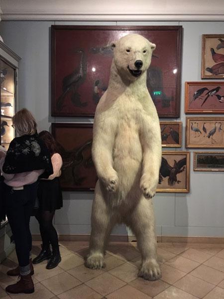 le musée de la Chasse : un ours polaire plus vrai que nature accueille les visiteurs