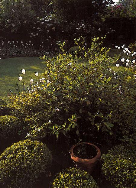 Le jardin de fleurs d'Hélène Rochas