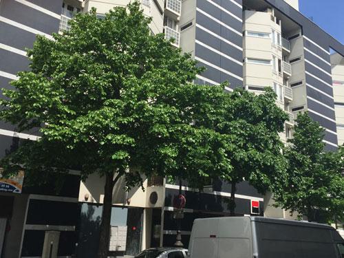 Logements Rue Jacques Hillairet : l'une des façades latérales