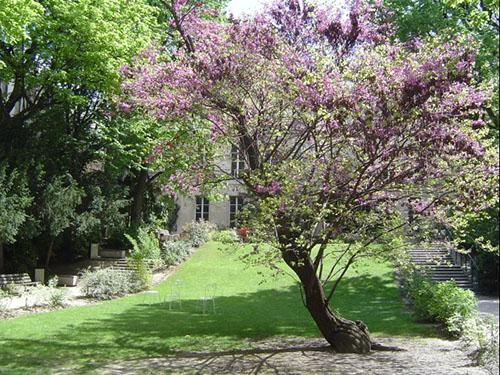 Le jardin reliant l'hôtel de La Meilleraye au siège de Sciences Po, rue Saint-Guillaume