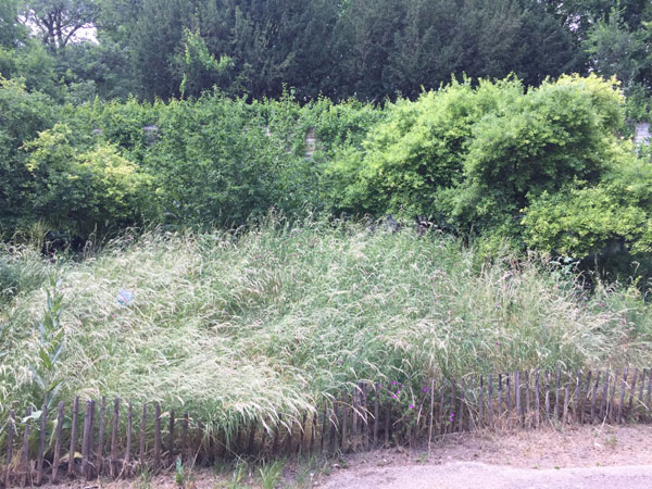 Le jardin naturel : la prairie