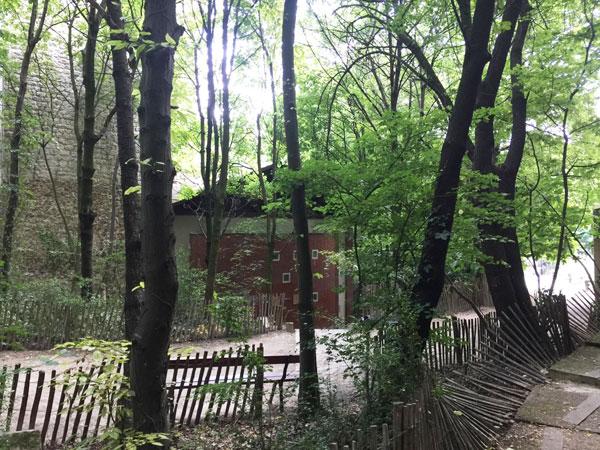 Le jardin naturel : le sous-bois